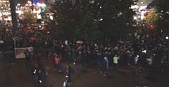 A libsi-bolsi söpredék már tüntet az AfD ellen.